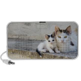 Dos gatos en los pasos de piedra iPhone altavoces
