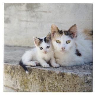 Dos gatos en los pasos de piedra azulejos