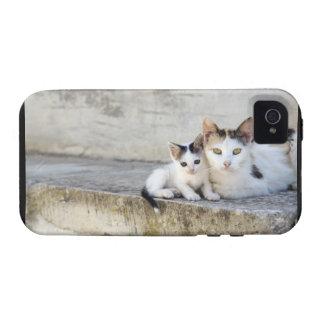 Dos gatos en los pasos de piedra iPhone 4 carcasa