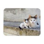 Dos gatos en los pasos de piedra imanes rectangulares