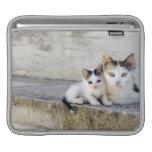 Dos gatos en los pasos de piedra manga de iPad