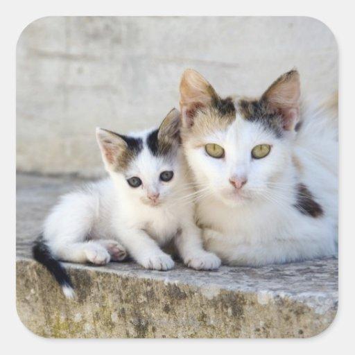 Dos gatos en los pasos de piedra colcomanias cuadradas