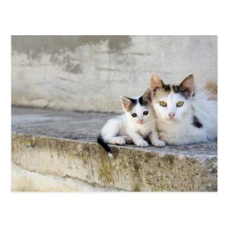 Dos gatos en los pasos de piedra postal