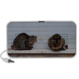Dos gatos en una repisa de la ventana notebook altavoces