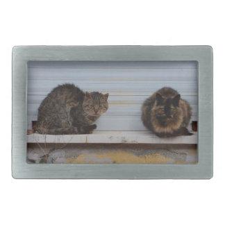 Dos gatos en una repisa de la ventana hebilla cinturon