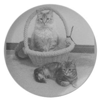 dos gatos ennegrecen la placa del blanco de n platos de comidas