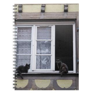 Dos gatos negros en la ventana libros de apuntes