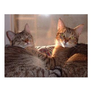 Dos gatos por la mañana Sun Tarjeta Postal