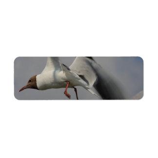 dos gaviotas que vuelan etiqueta de remite