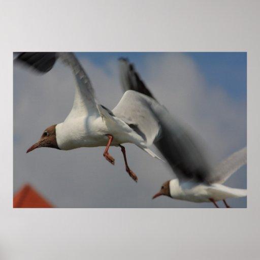 dos gaviotas que vuelan poster