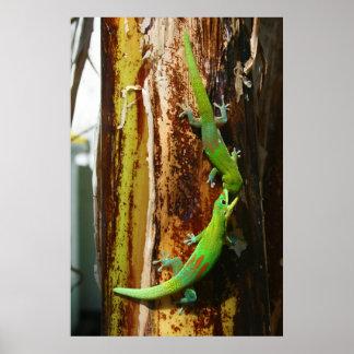 Dos geckos Phelsuma Laticauda del día del polvo de Impresiones