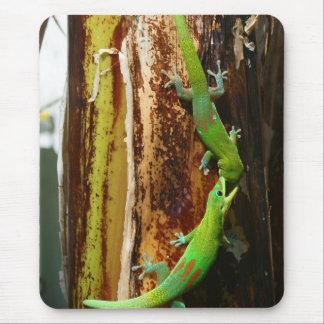 Dos geckos Phelsuma Laticauda del día del polvo de Tapetes De Ratones