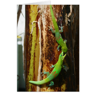 Dos geckos Phelsuma Laticauda del día del polvo de Felicitaciones