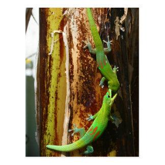 Dos geckos Phelsuma Laticauda del día del polvo de Tarjetas Postales