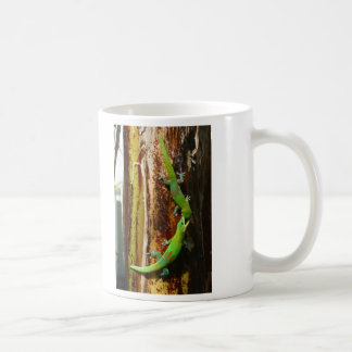 Dos geckos Phelsuma Laticauda del día del polvo de Taza De Café