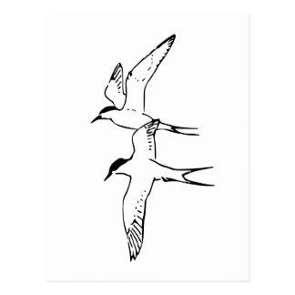 Dos golondrinas de mar árticas que vuelan postal