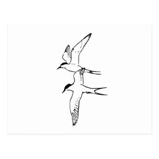 Dos golondrinas de mar árticas que vuelan postales