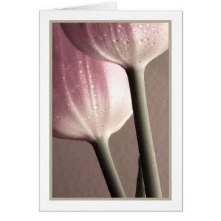 Dos gotas de agua de PinkTulips, fotografía, plant