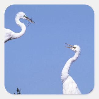 Dos grandes Egrets (Ardea alba) en un cortejo Calcomania Cuadradas Personalizada