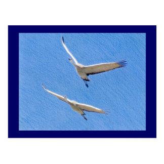 Dos grúas del sandhill que vuelan tarjetas postales