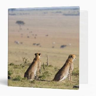 """Dos guepardos en la mirada hacia fuera carpeta 1 1/2"""""""