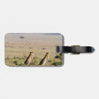 Dos guepardos en la mirada hacia fuera etiquetas para maletas