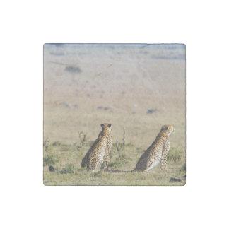 Dos guepardos en la mirada hacia fuera imán de piedra