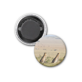 Dos guepardos en la mirada hacia fuera imán redondo 3 cm
