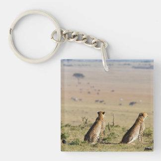 Dos guepardos en la mirada hacia fuera llavero cuadrado acrílico a una cara