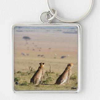 Dos guepardos en la mirada hacia fuera llavero cuadrado plateado