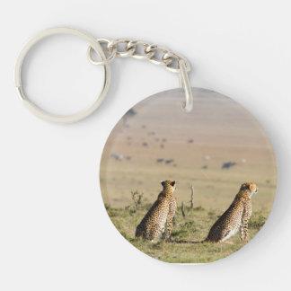Dos guepardos en la mirada hacia fuera llavero redondo acrílico a una cara
