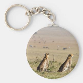 Dos guepardos en la mirada hacia fuera llavero redondo tipo pin