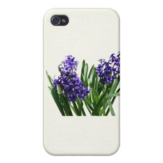 Dos jacintos púrpuras iPhone 4 carcasas