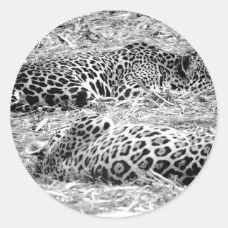 dos jaguares ennegrecen el animal blanco el dormir etiquetas redondas