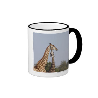 Dos jirafa, parque nacional de Kruger, Suráfrica Taza De Café