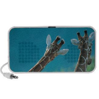 Dos jirafas (camelopardalis del Giraffa) iPod Altavoz