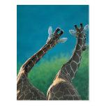Dos jirafas (camelopardalis del Giraffa) Tarjetas Postales