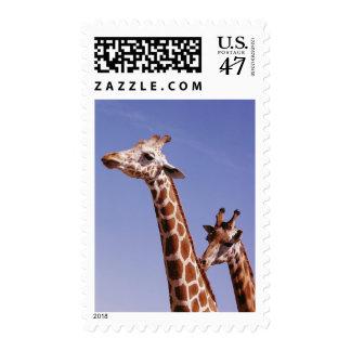 Dos jirafas cariñosas sello postal