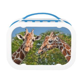 Dos jirafas de cotilleo