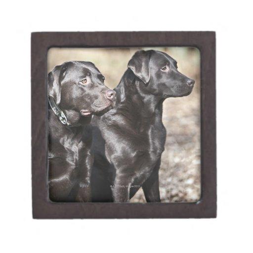 Dos labradores retrieveres negros cajas de regalo de calidad