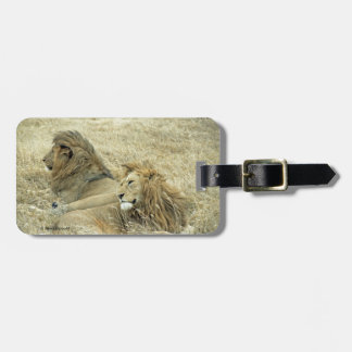Dos leones masculinos etiquetas bolsas