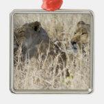 Dos leones ocultados en la hierba seca, nacional adorno cuadrado plateado