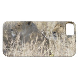 Dos leones ocultados en la hierba seca, nacional iPhone 5 funda