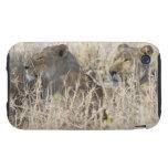 Dos leones ocultados en la hierba seca, nacional tough iPhone 3 carcasas