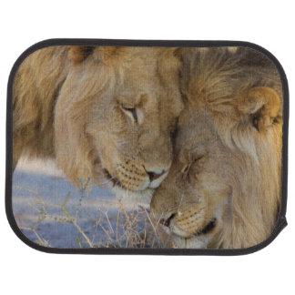Dos leones que se frotan alfombrilla de auto