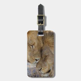 Dos leones que se frotan etiquetas maleta