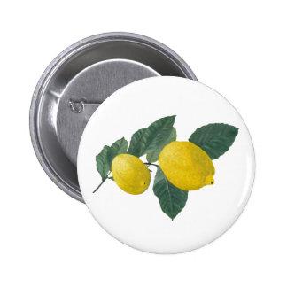 Dos limones en una rama. Pintura de aceite Pin
