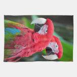 Dos loros coloridos del macaw toalla de cocina