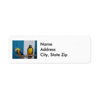 Dos Macaws azules y del oro Etiquetas De Remite