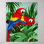 Dos Macaws del escarlata Posters